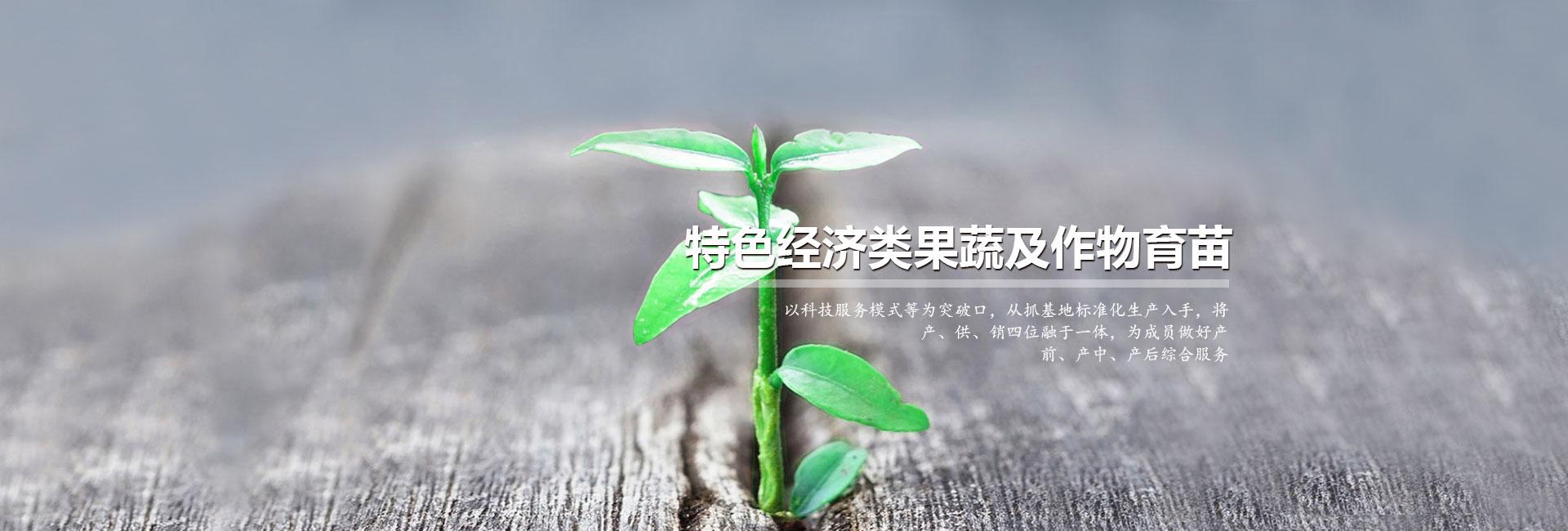 内蒙古苗木
